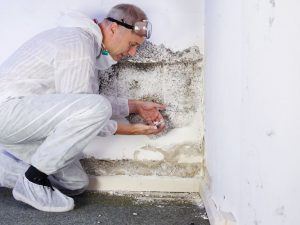mold-remediation-long-island-ny